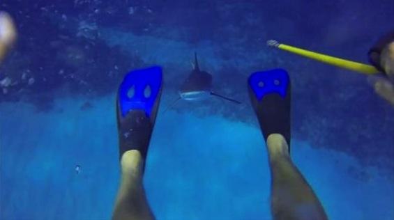 03-shark_attack